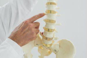 spinemodel - back neck joint pain